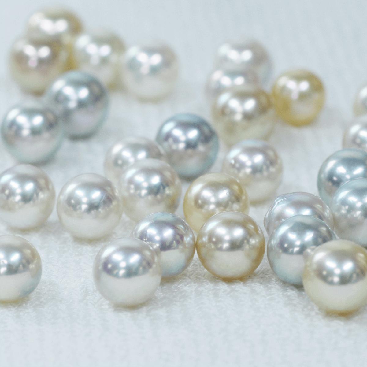 真珠の選別作業の写真